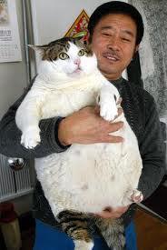 Visresnākais kaķis pasaulē... Autors: MilfHunter Ginesa Pasaules Rekordi 2