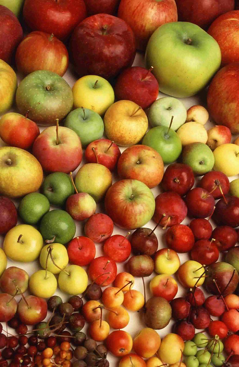 Ir tik daudz āboļu sortes ka... Autors: HotAsFire Visvisādi fakti.