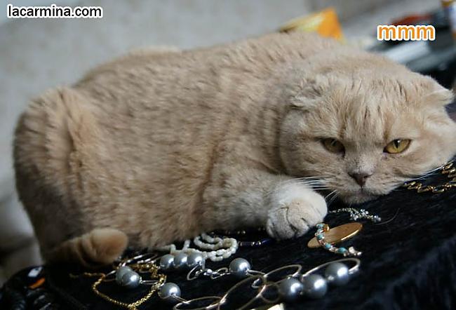 Kaķa kaulos tika atrastas... Autors: Raziels Par ko kaķi zina, bet nerunā