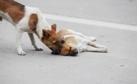 Scaronis stāsts vēsta par... Autors: Kačuks123 Pārsteidzoši stāsti par suņiem