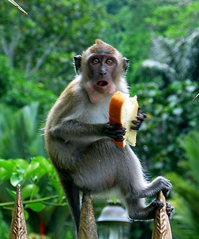 Марта пожеланиями, смешные картинки с обезьянками с прикольными надписями